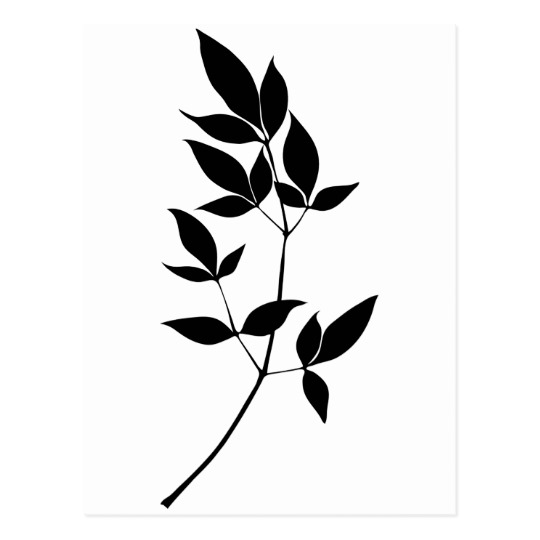 540x540 Black Amp White Vector Leaves Branch Silhouette Postcard