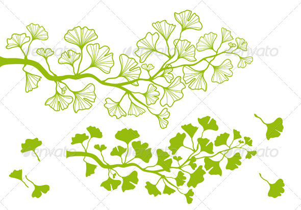 590x413 Ginkgo Branch With Leaves, Vector By Amourfou Graphicriver