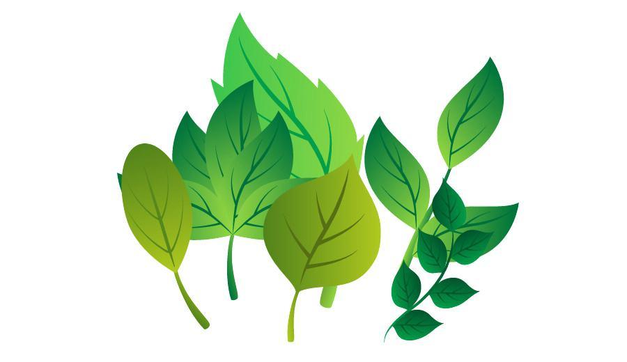 900x520 Leaf Plant Stem Branch Fresh Leaves Vector With Free Ballnet.co