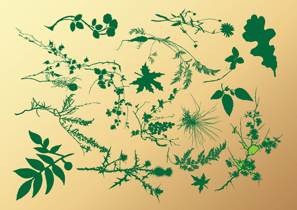 1024x724 Leaf And Branch Collection