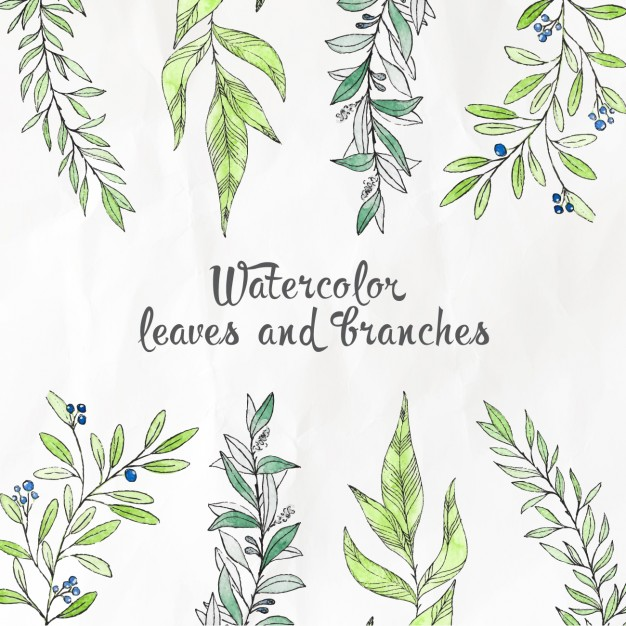 626x626 Watercolor Leaves And Branches Vector Free Download