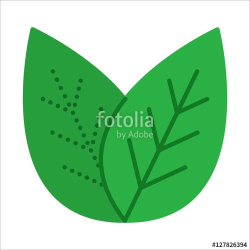 500x500 Green Tea Leaves. Flat Design. Thin Line Leaf Icon. Vector