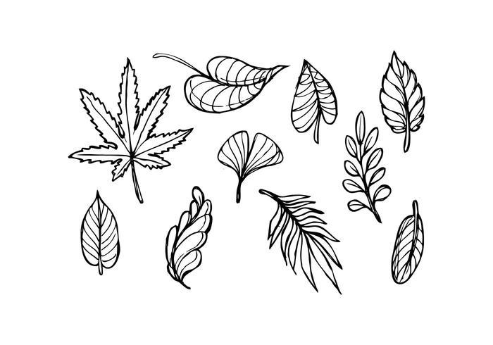 700x490 Leaf Sketch Icon Vector