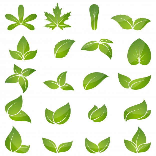 626x626 Leaf Vectors, Photos And Psd Files Free Download