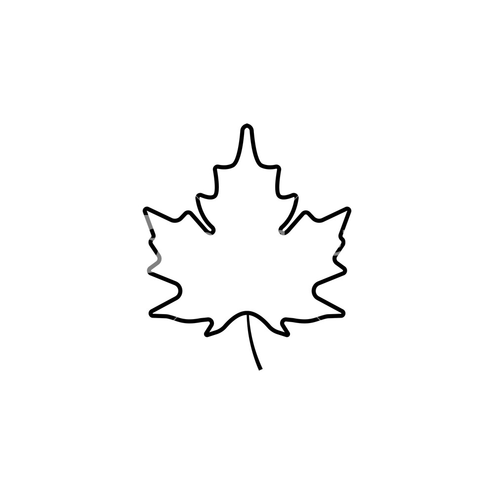 1000x1000 Maple Leaf Icon. Vector Illustration Royalty Free Stock Image