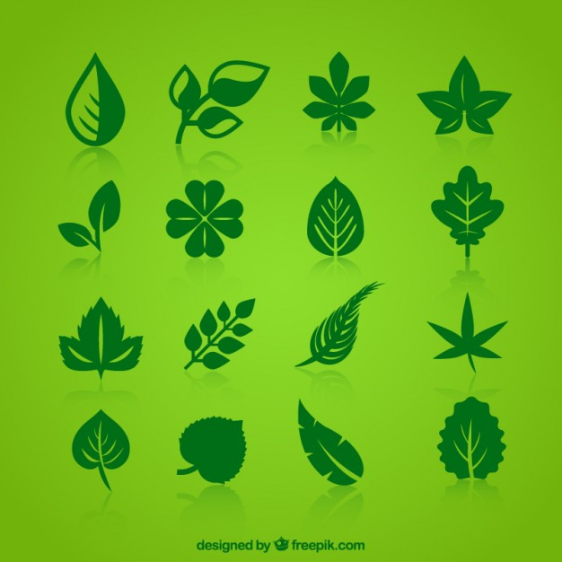 626x626 Collection Of Green Leaves Icons Vector Free Download