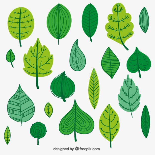 626x626 Green Leaves Illustration Vector Free Download