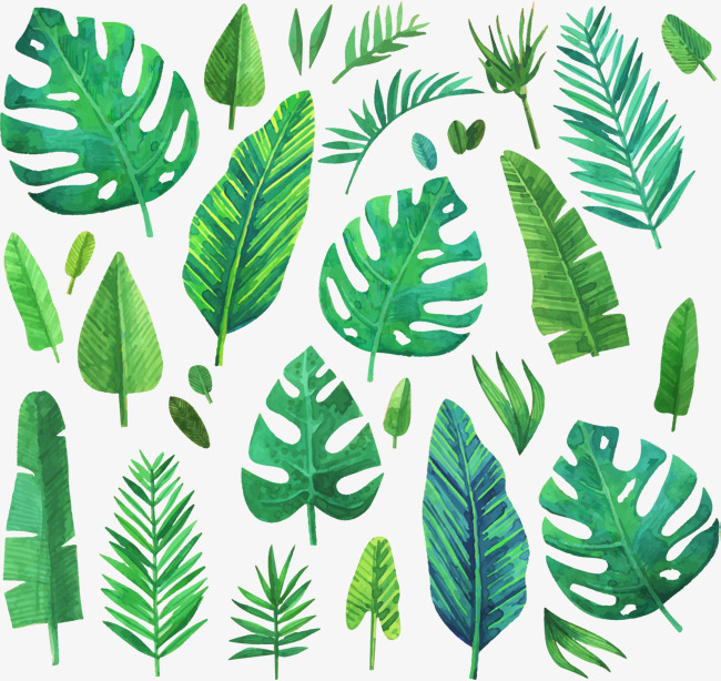 650x614 Leaf Vectors, 19,827 Graphic Resources For Free Download
