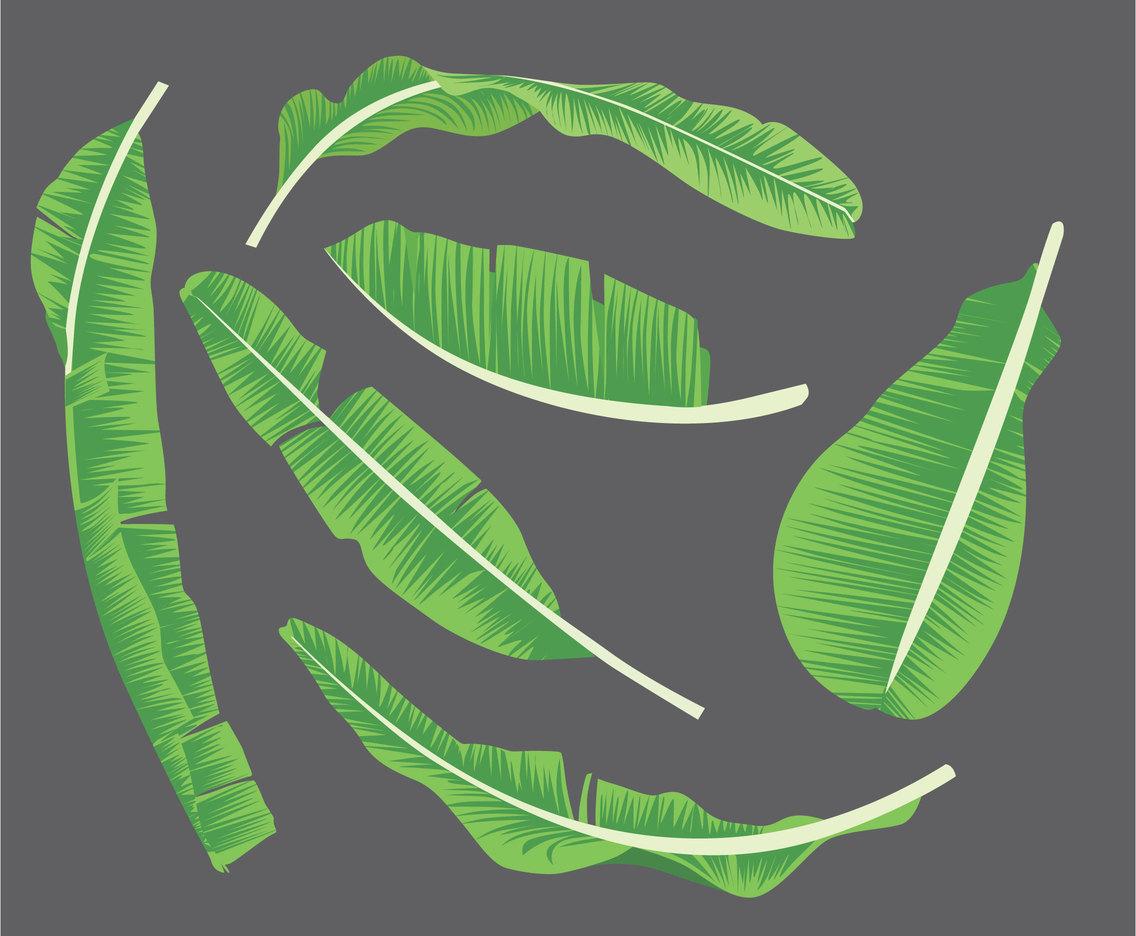 1136x936 Banana Leaf Illustration Vector Vector Art Amp Graphics