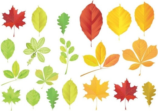 521x368 Leaves Free Vector Download (3,595 Free Vector) For Commercial Use