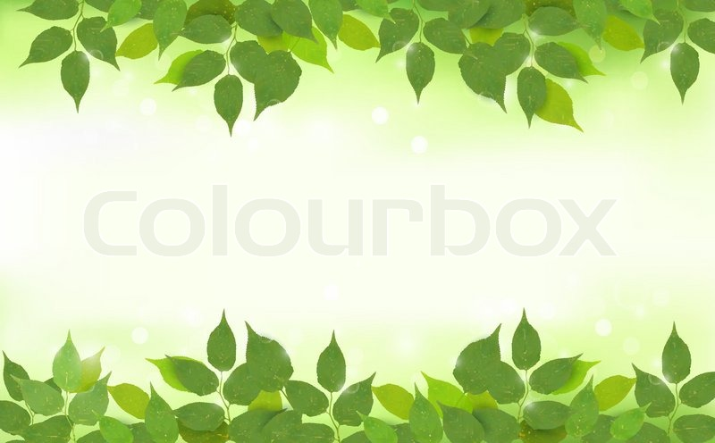 800x496 Nature Background With Green Fresh Leaves Vector Illustration