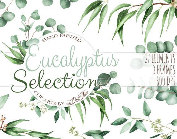 570x448 Watercolor Eucalyptus Clipart Greenery Clip Art Eucalyptus Etsy