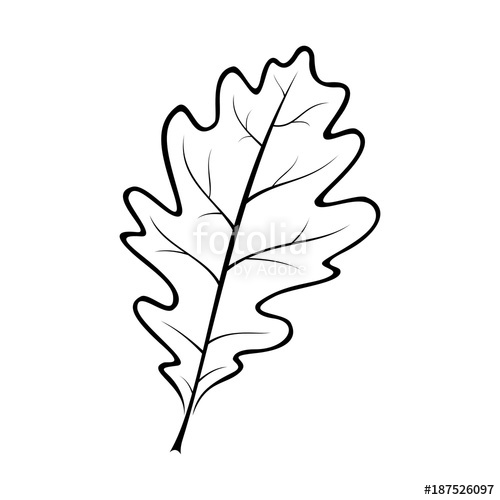 500x500 Black And White Vector Illustration Of An Oak Leaf Stock Image