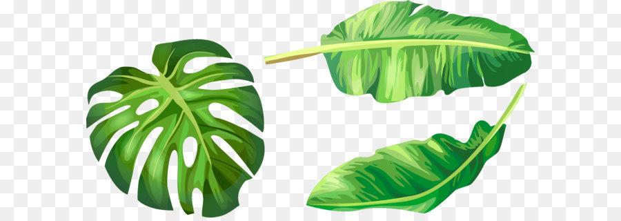 900x320 Banana Leaf Euclidean Vector Illustration