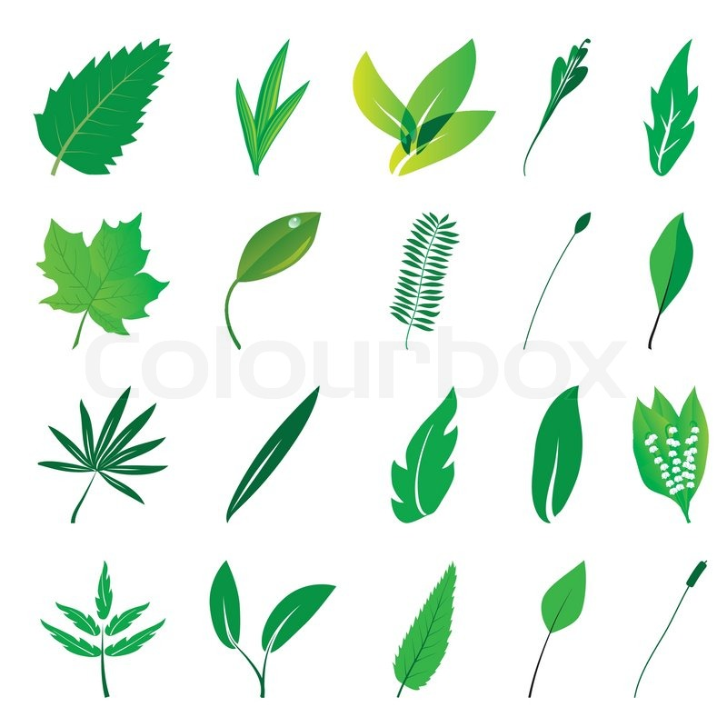 800x800 Collection Of Isolated Green Leaves Vector Illustration Stock