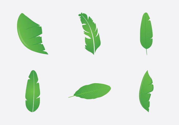 700x490 Free Banana Leaf Vector Illustration