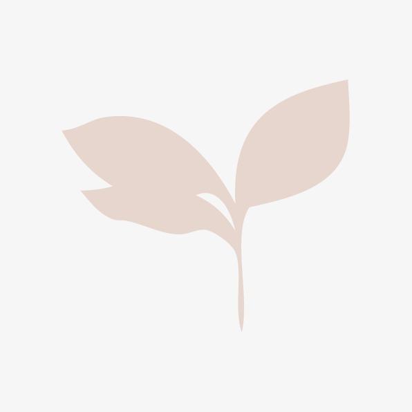 596x596 Leaf, Leaf Outline, Vector Leaf Png And Vector For Free Download