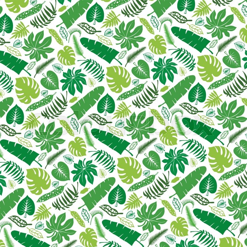 800x800 Tropical Palm Leaves Patternvector Green Leaf Silhouette