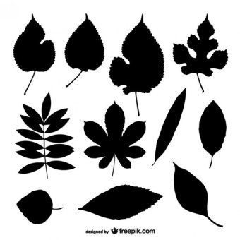 Leaf Vector Art