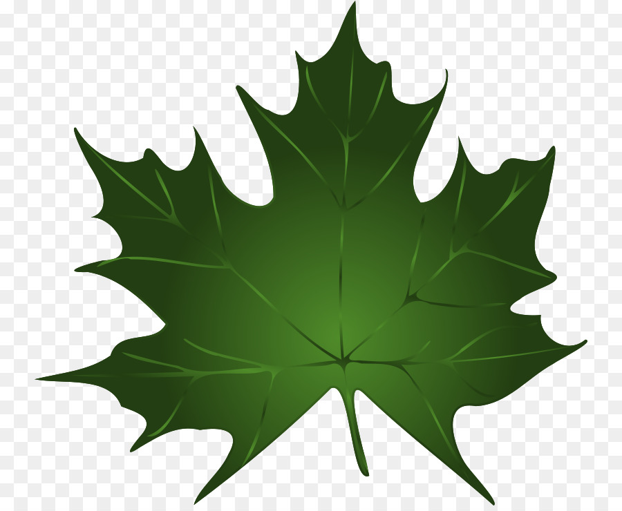 900x740 Download Green Maple Leaf Clip Art Maple Leaf Vector Free Download