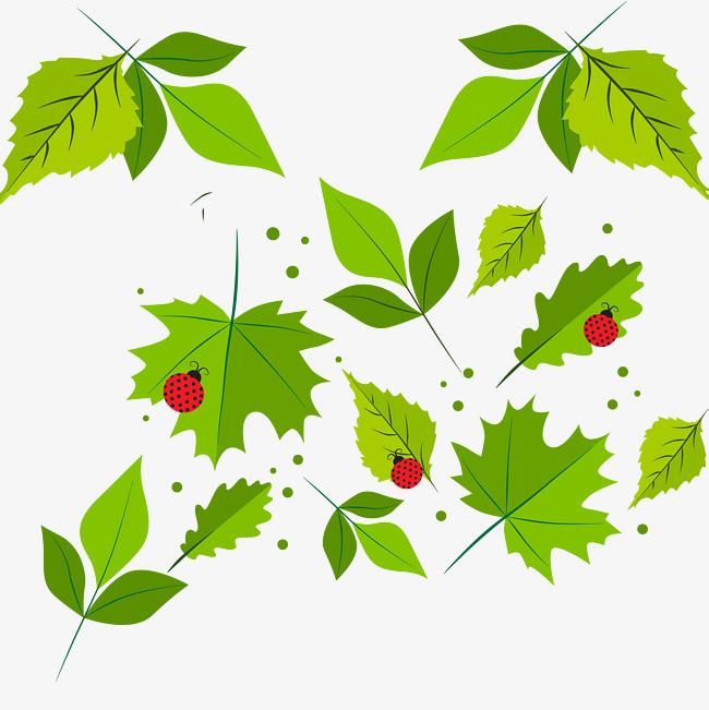 650x651 Spring Fresh Green Leaf Vector, Spring Vector, Green Vector, Leaf