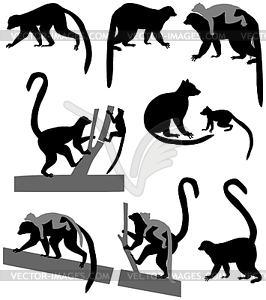 266x300 Silhouette Of Ring Tailed Lemur