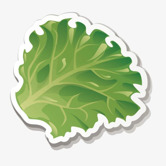 650x651 Vector Fresh Green Lettuce, Lettuce Vector, Vegetables, Emerald