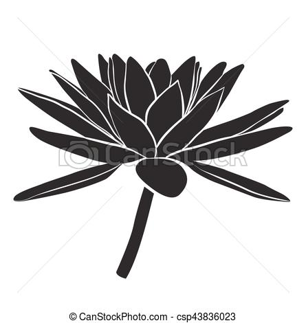 445x470 Floral Water Lily. Vector Line Style. Floral Water Lily For Design