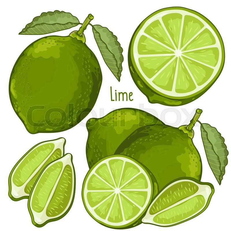 800x800 Lime Isolated, Lime Vector. Composition Of Lime On White