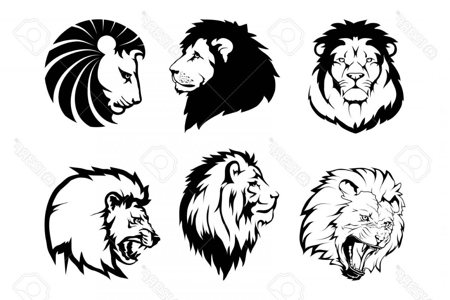 1560x1039 Photostock Vector Lion Logo Vector Animal Lion King Lion Isolated