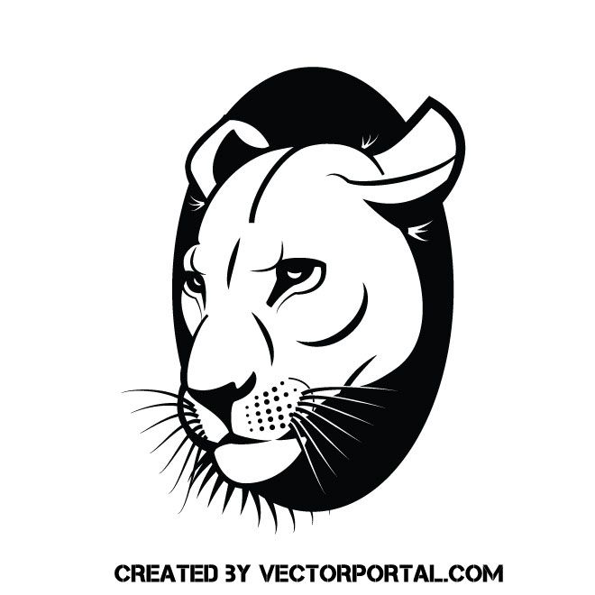 Lioness Vector at GetDrawings com | Free for personal use Lioness