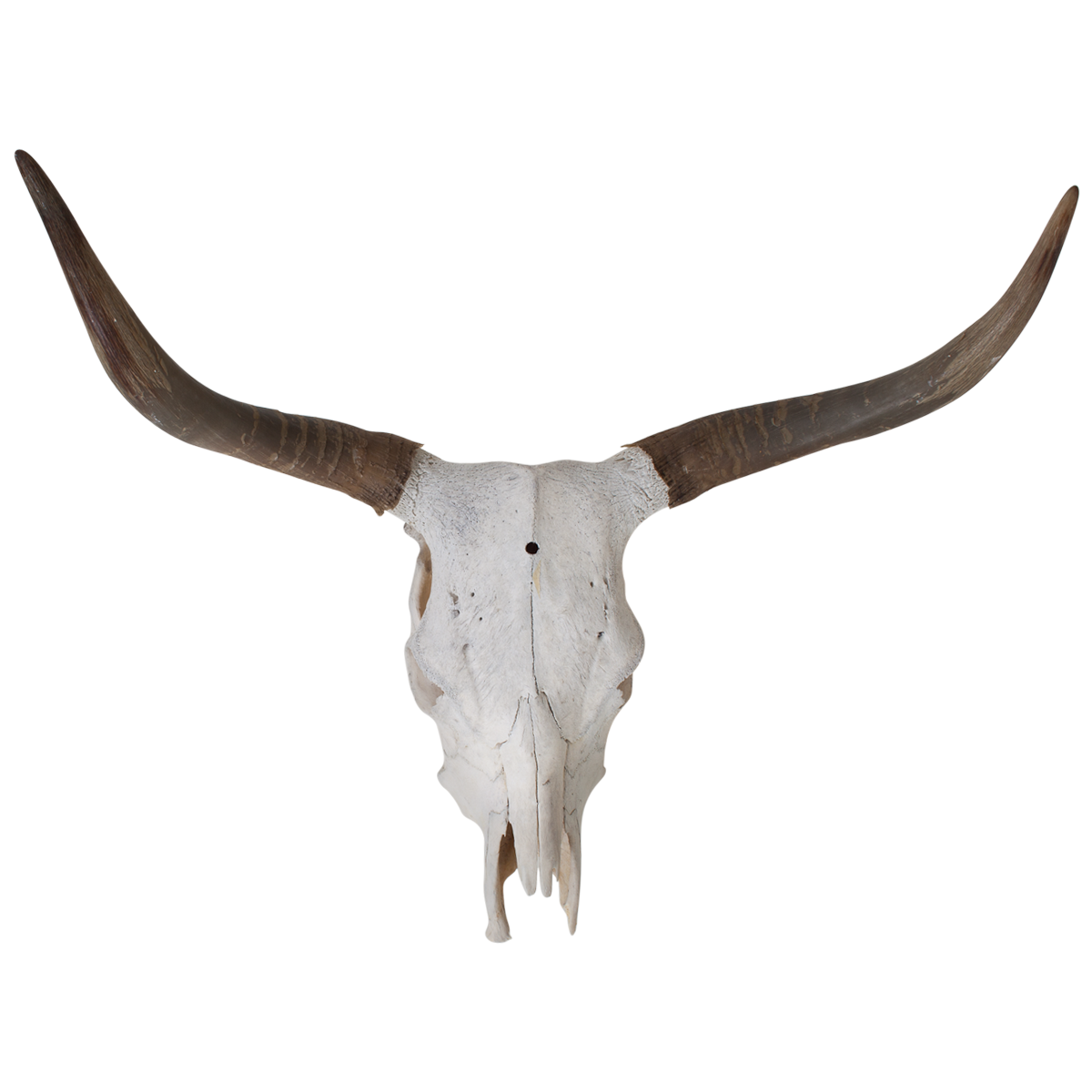 1200x1200 Collection Of Free Longhorn Vector Skull. Download On Ubisafe
