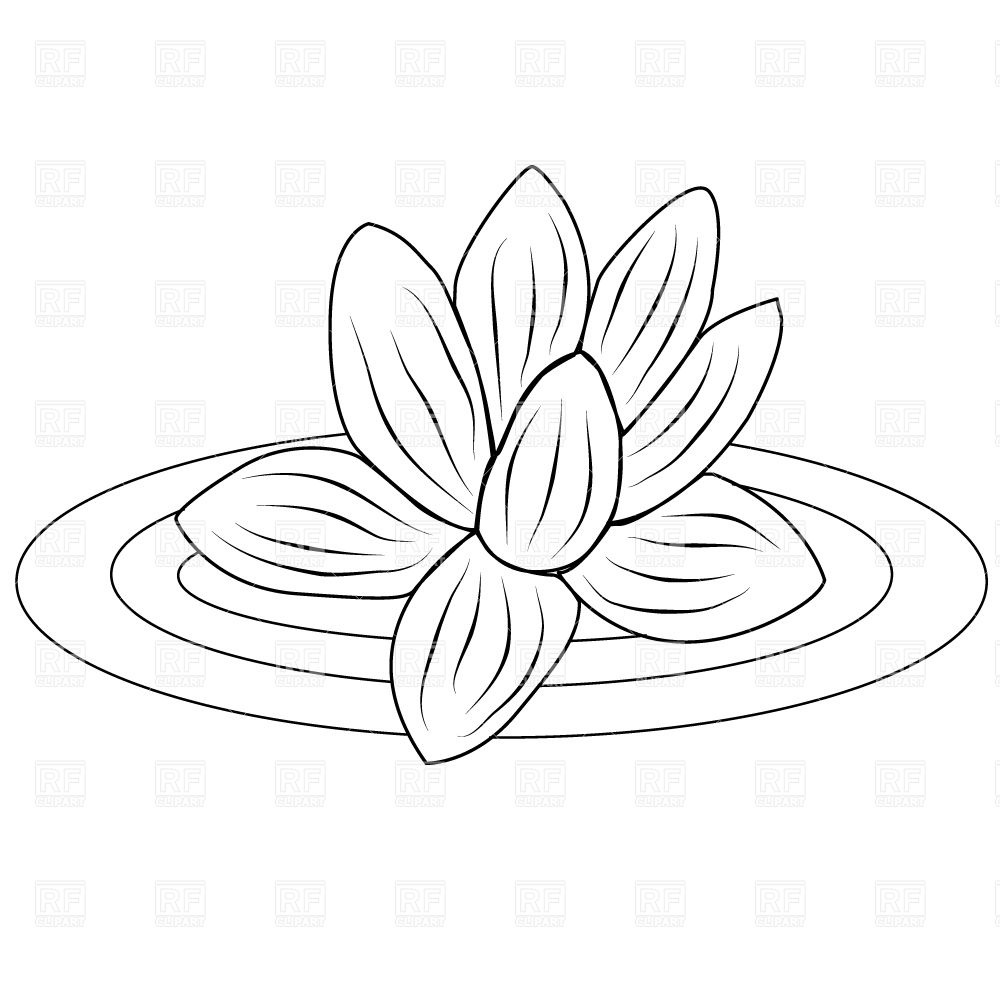 Lotus Flower Vector At Getdrawingscom Free For Personal Use Lotus