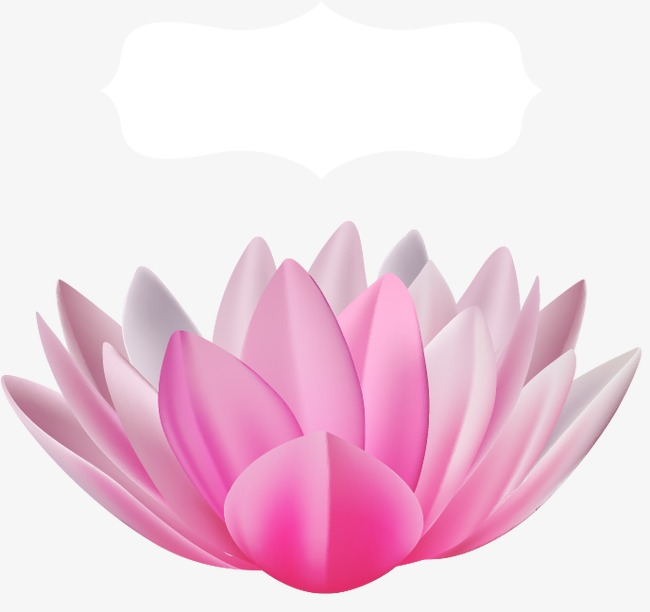 Lotus Flower Vector Free Download At Getdrawingscom Free For