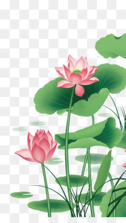 Lotus Vector At Getdrawingscom Free For Personal Use Lotus Vector