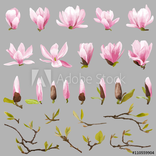 500x500 Magnolia Flowers And Leaves Set. Exotic Flower. Vector