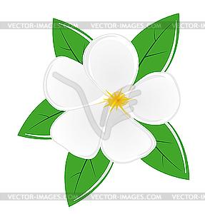 287x300 Magnolia Flower