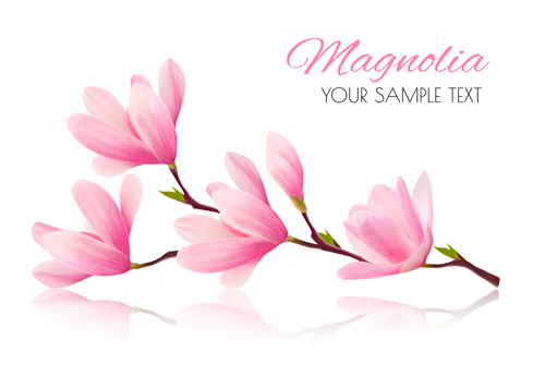 500x345 Pink Magnolia Flower Background Vector 01 Free Download