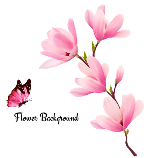 500x531 Pink Magnolia Flower Background Vector 02 Free Download