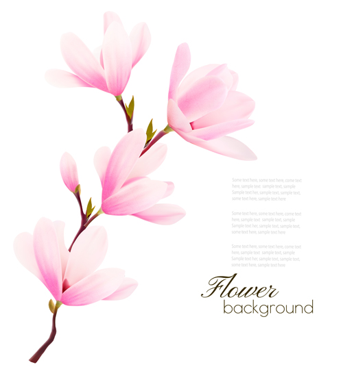 500x536 Pink Magnolia Flower Background Vector 04 Free Download