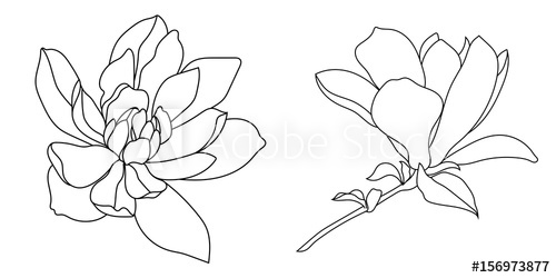 Magnolia Flower Vector At Getdrawingscom Free For Personal Use