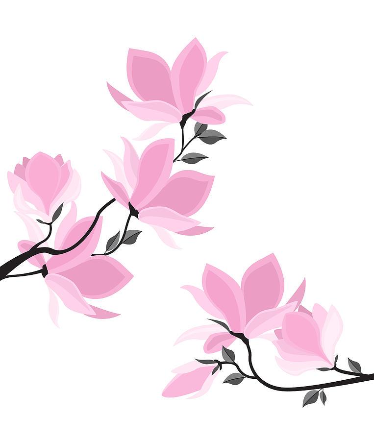 763x900 Vector Magnolia Flowers Drawing By Miroslava Hlavacova