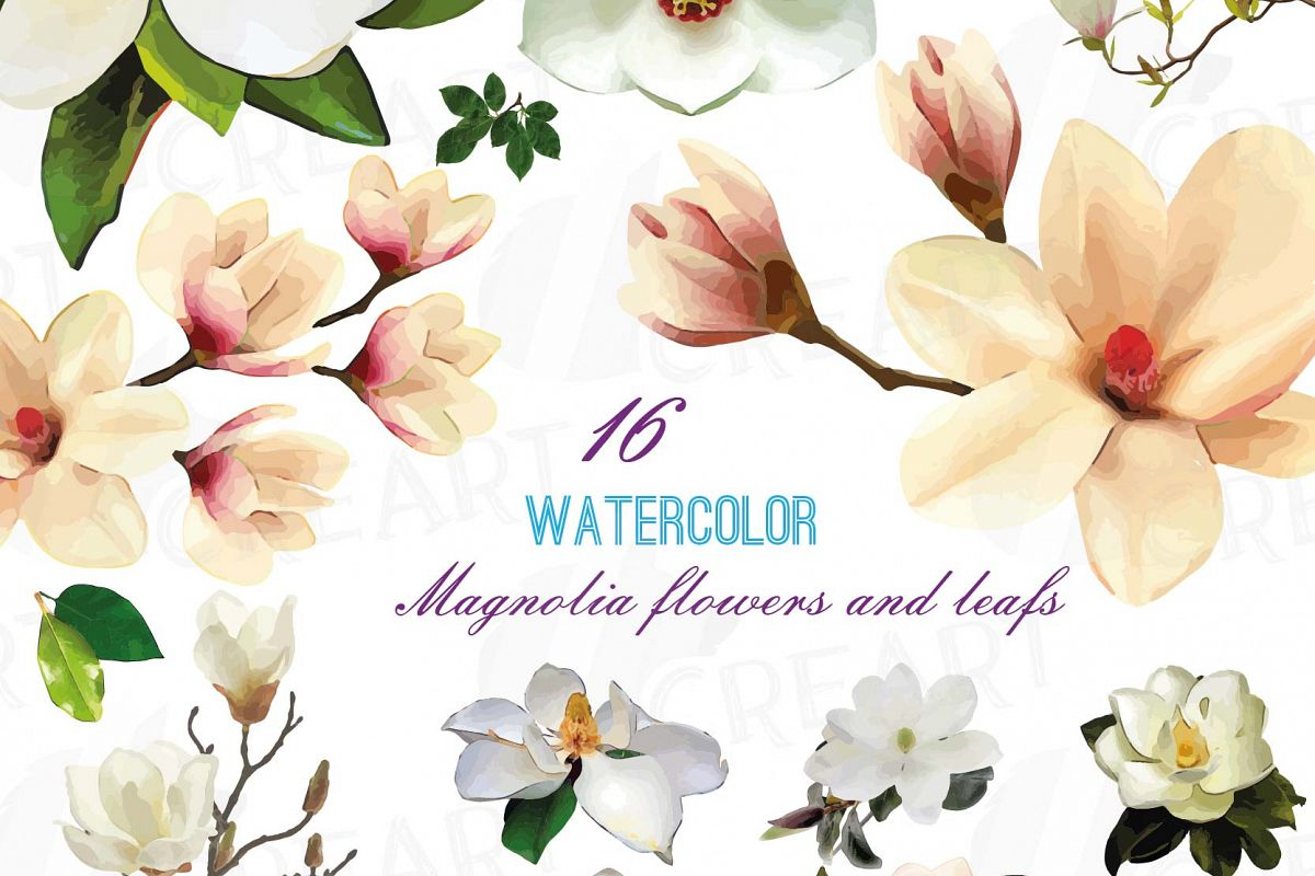 1200x800 Watercolor White Magnolia Flowers And Leafs Clip Art Pack