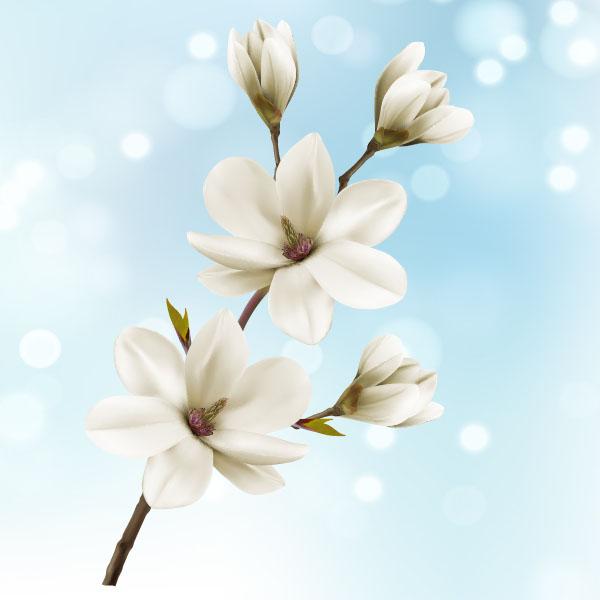 600x600 White Magnolia Flower Vector