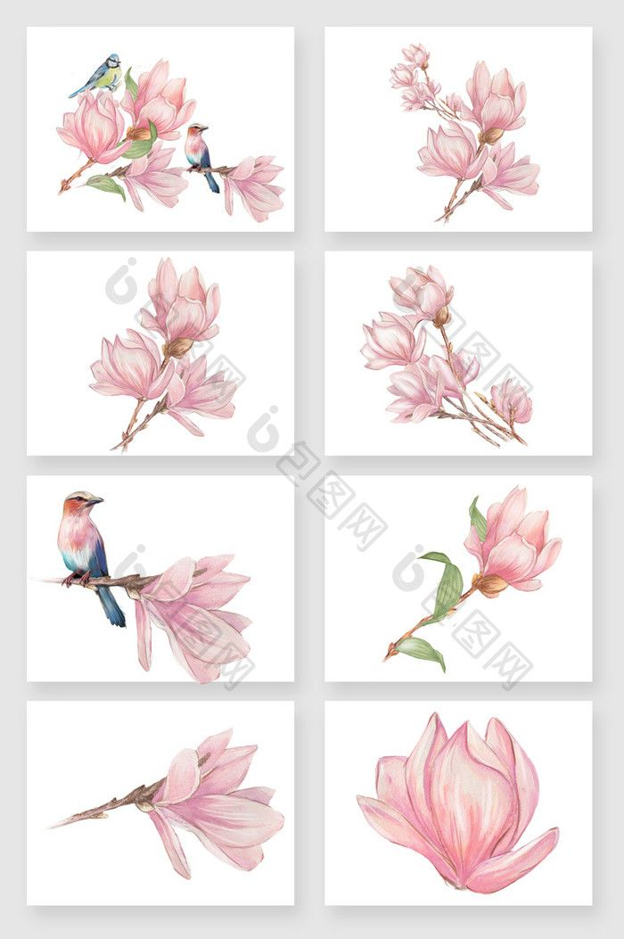 700x1053 Hand Painted Pink Beautiful Magnolia Flower Vector Material. Free