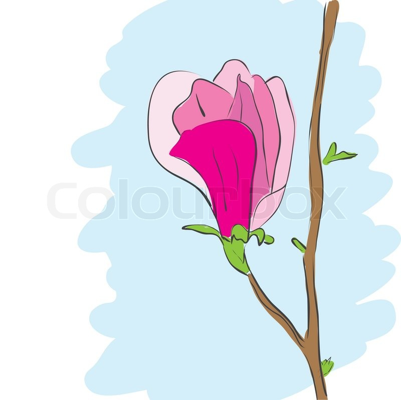 800x799 Magnolia Vector Drawing Illustration Stock Vector Colourbox