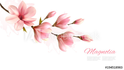 500x284 Nature Background With Blossom Branch Of Pink Magnolia. Vector