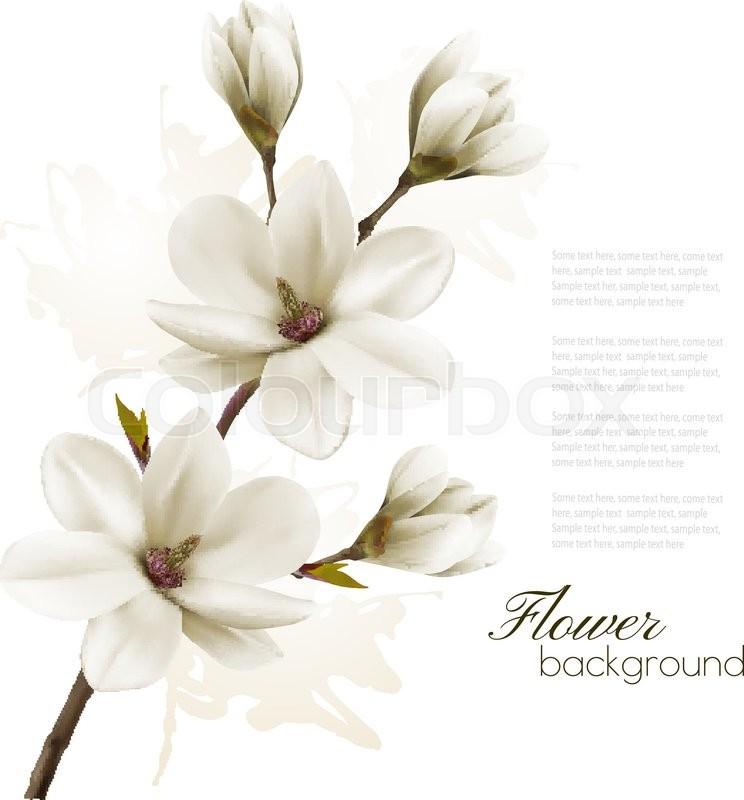 744x800 Spring Background With Blossom Brunch Of White Magnolia. Vector