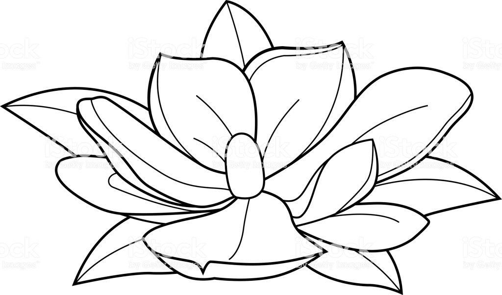1024x601 Magnolia Flower Coloring Page