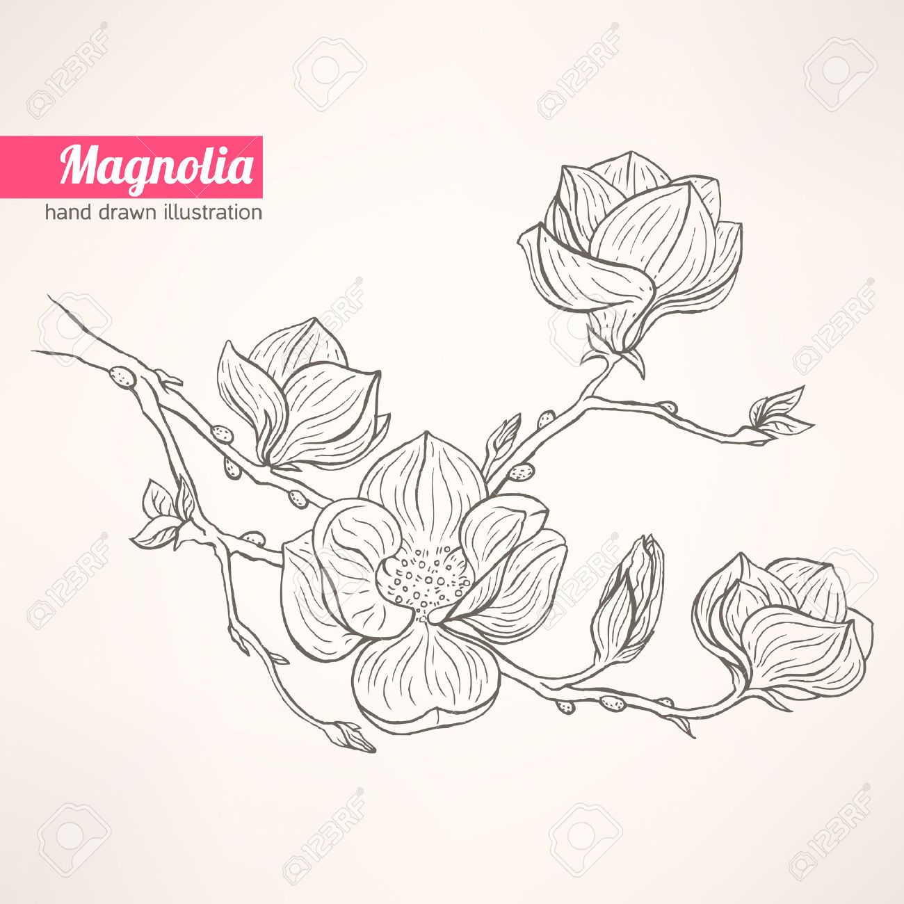 1300x1300 Beautiful Background With Hand Drawn Blooming Magnolia Twig